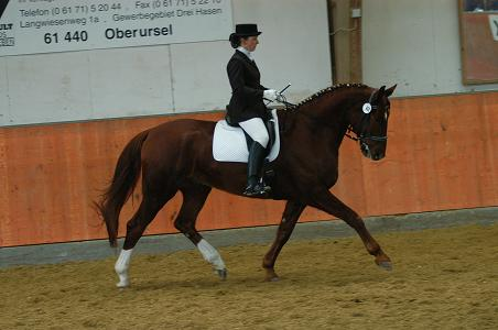 Donner, Bavarian Warmblood